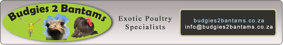 Exotic Poultry Gauteng